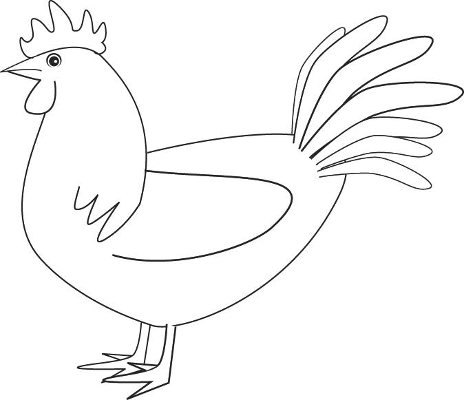 colorear gallo