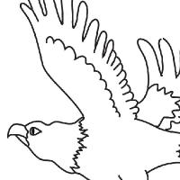 Colorear águila