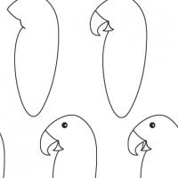 Dibujos loro